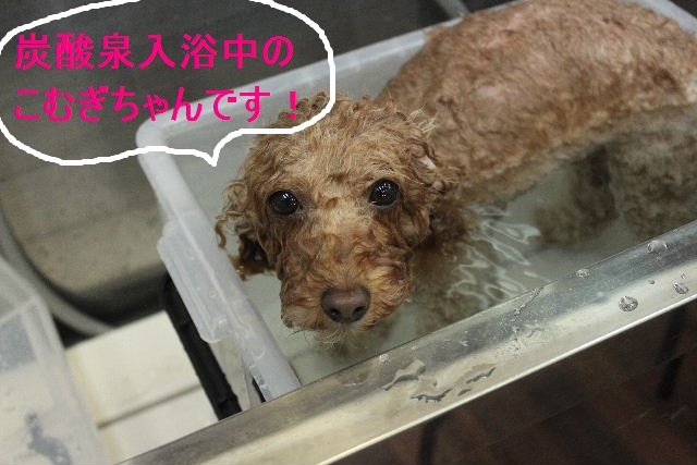 紹介しまぁ~す!!_b0130018_2391332.jpg