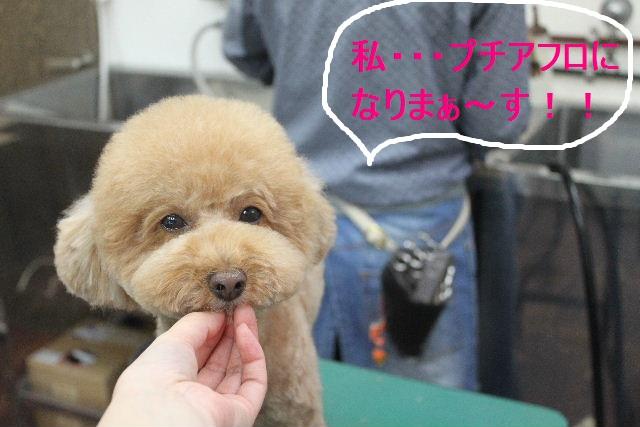 紹介しまぁ~す!!_b0130018_2395378.jpg