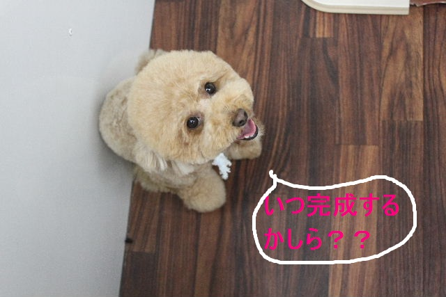 紹介しまぁ~す!!_b0130018_2395885.jpg