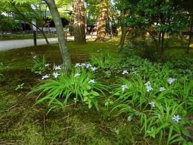 清水園から6月のご案内です。_e0135219_11262838.jpg