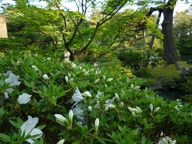 清水園から6月のご案内です。_e0135219_1129441.jpg