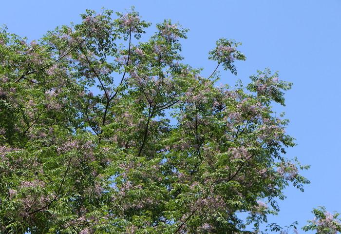初夏の青空の下で_d0150720_919305.jpg