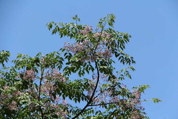 初夏の青空の下で_d0150720_91951100.jpg