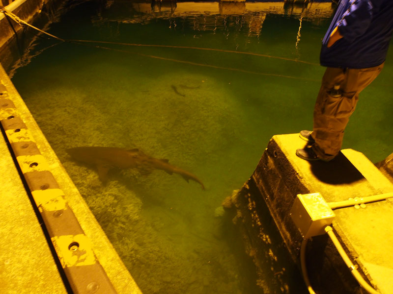 夜の漁港_e0189021_221215.jpg