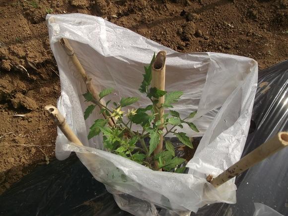 夏野菜、その後_b0137932_12581492.jpg