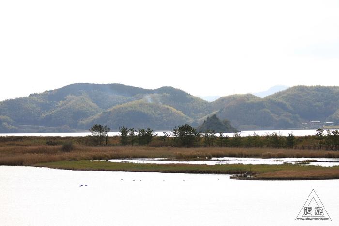 376 米子水鳥公園 ~親父と鳥撮りその3~_c0211532_21522694.jpg