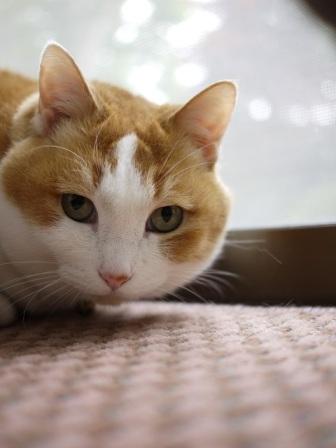 猫のお友だち ふくちゃん編。_a0143140_2359281.jpg