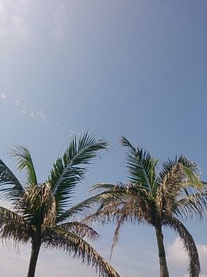 5月17日 空が青いー! _b0158746_164856100.jpg