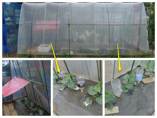 ピンク農法検証開始_c0063348_2315723.jpg