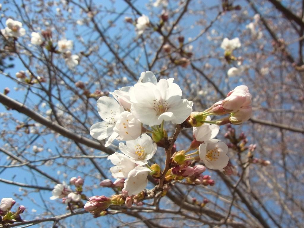 2014/04/07 真木お伊勢山 後編_d0233770_2163832.jpg