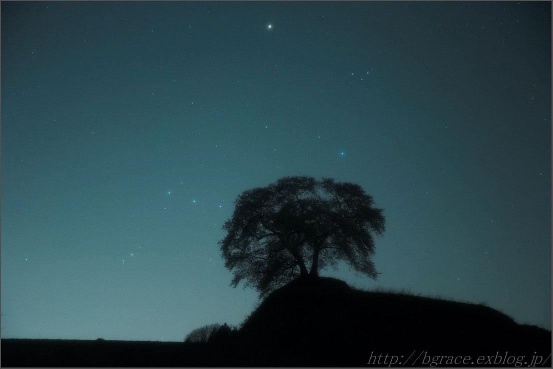 一本桜にオリオン沈む_b0191074_1245615.jpg