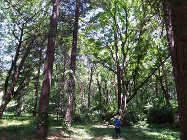 国立森林浴_c0200002_1459895.jpg