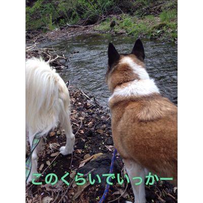 f0109202_17273649.jpg