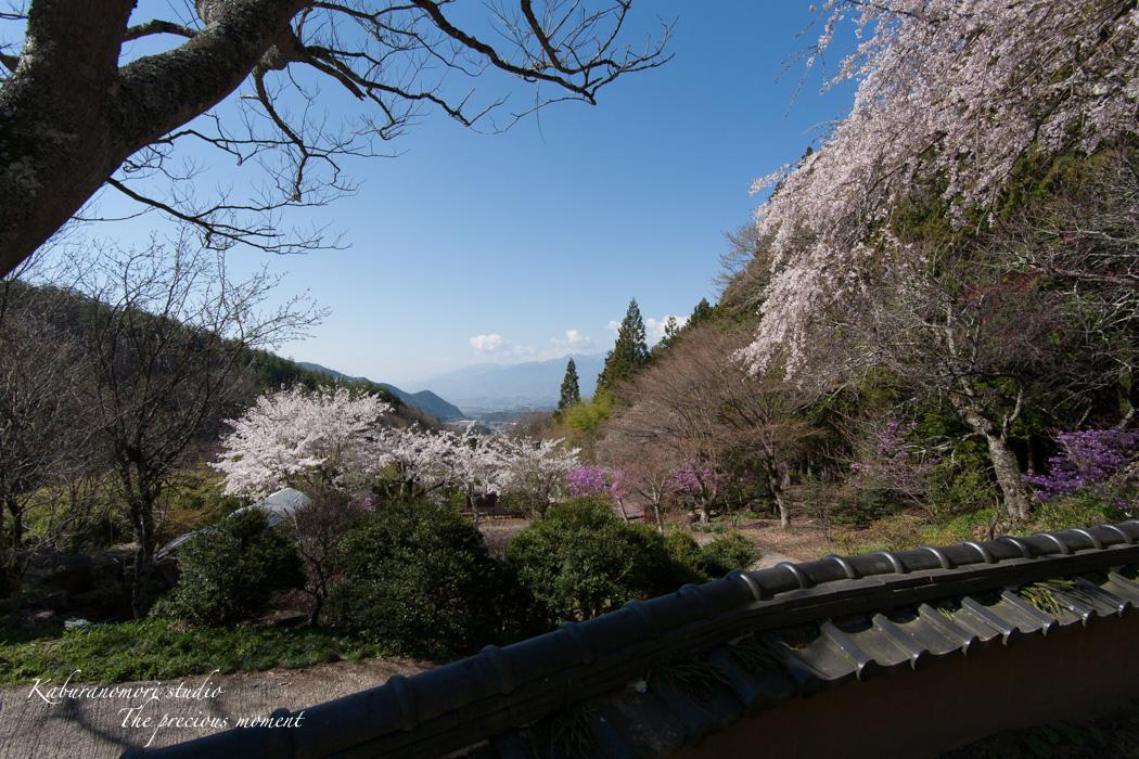 春の津金、海岸寺とその登り口の村にある旧津金学校_c0137403_16253698.jpg