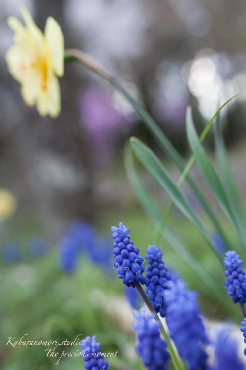 春の津金、海岸寺とその登り口の村にある旧津金学校_c0137403_16265213.jpg