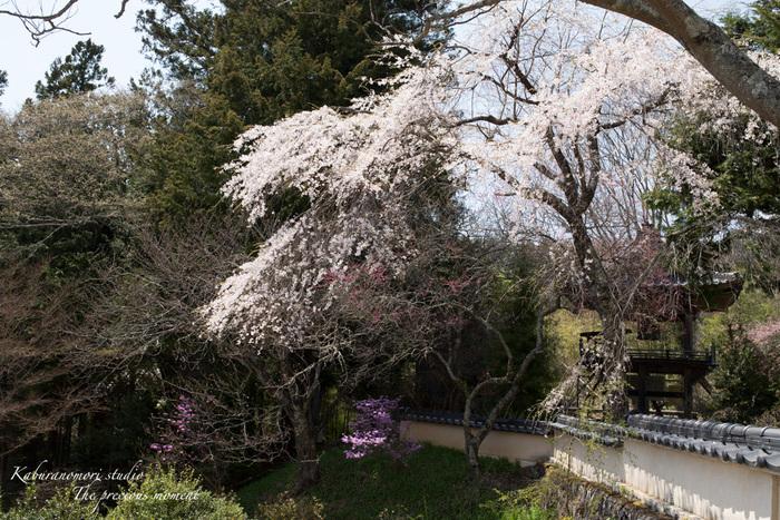 春の津金、海岸寺とその登り口の村にある旧津金学校_c0137403_16303815.jpg