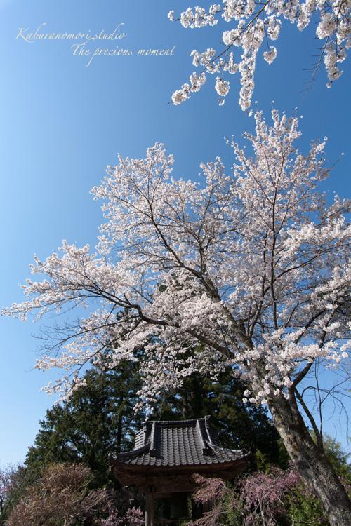 春の津金、海岸寺とその登り口の村にある旧津金学校_c0137403_16314264.jpg