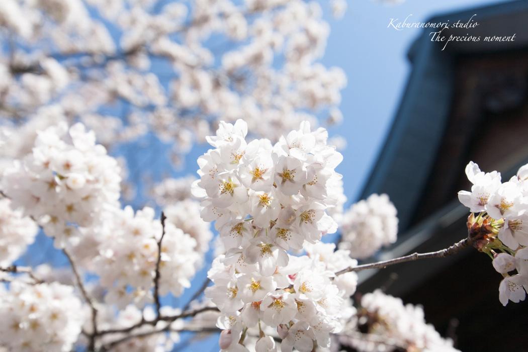 春の津金、海岸寺とその登り口の村にある旧津金学校_c0137403_16321557.jpg