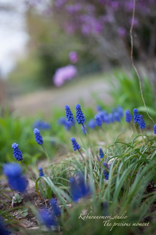 春の津金、海岸寺とその登り口の村にある旧津金学校_c0137403_1633659.jpg