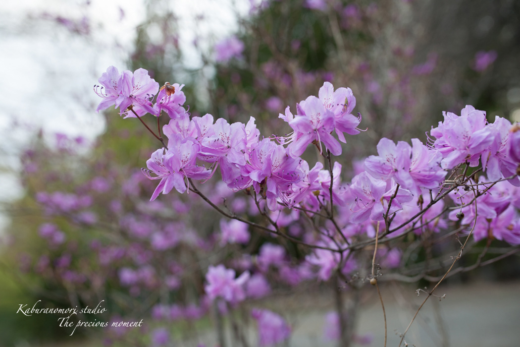 春の津金、海岸寺とその登り口の村にある旧津金学校_c0137403_16343743.jpg