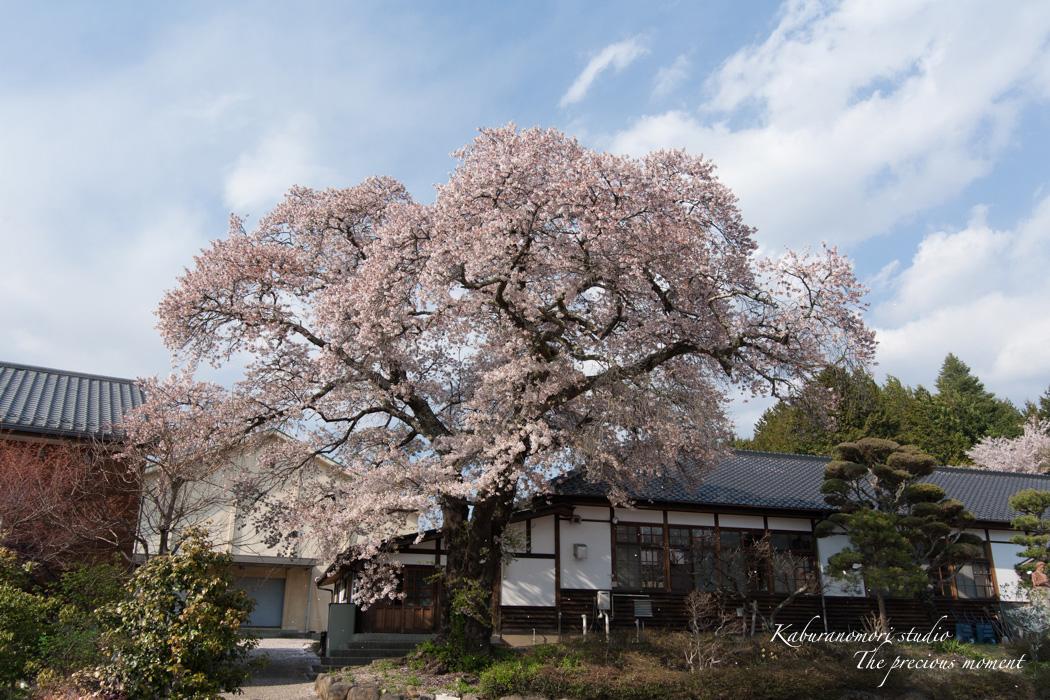 春の津金、海岸寺とその登り口の村にある旧津金学校_c0137403_1635326.jpg