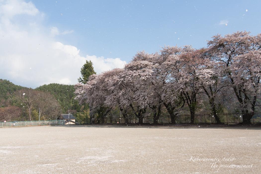 春の津金、海岸寺とその登り口の村にある旧津金学校_c0137403_16354044.jpg