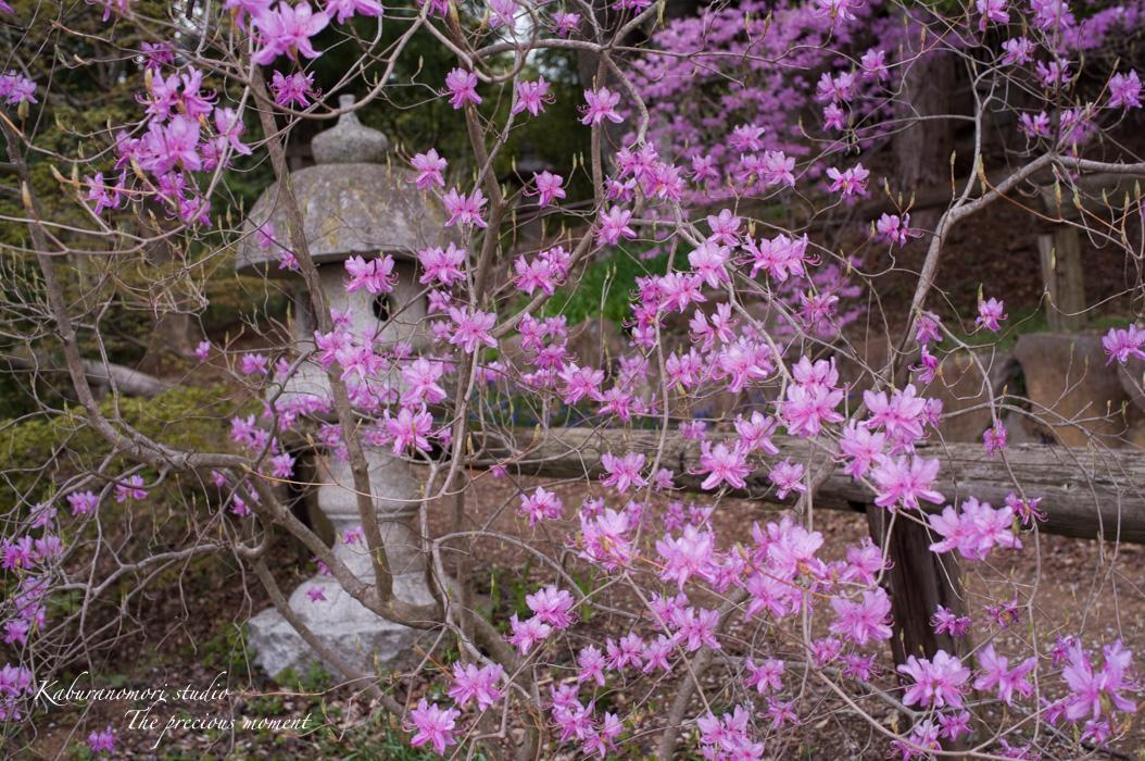 春の津金、海岸寺とその登り口の村にある旧津金学校_c0137403_16435551.jpg