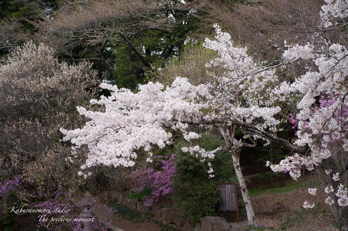 春の津金、海岸寺とその登り口の村にある旧津金学校_c0137403_16451699.jpg