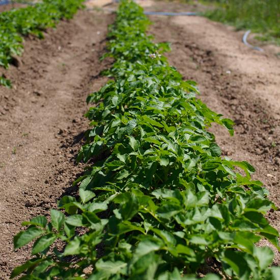 畑の中で夏野菜を思うだ。。。。_e0065906_12112462.jpg