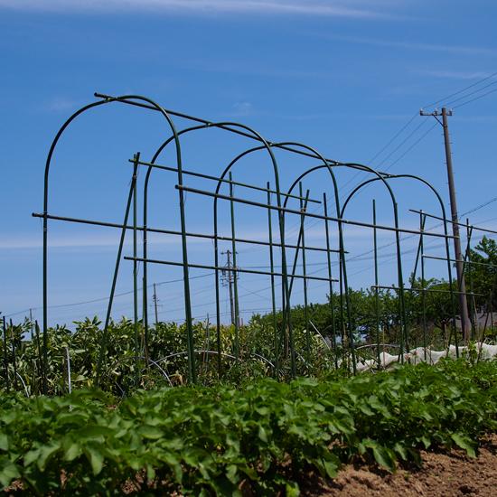 畑の中で夏野菜を思うだ。。。。_e0065906_12503062.jpg