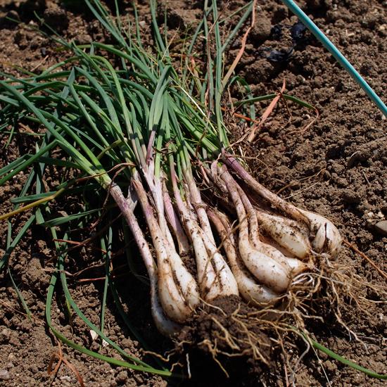 畑の中で夏野菜を思うだ。。。。_e0065906_1266100.jpg