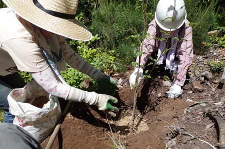 【報告】5月17日(土)松山の整備とちょこっと植林(前半)_e0032609_01222010.jpg
