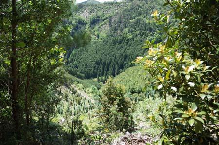 【報告】5月17日(土)松山の整備とちょこっと植林(後半)_e0032609_01543248.jpg