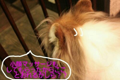 b0130018_0102037.jpg