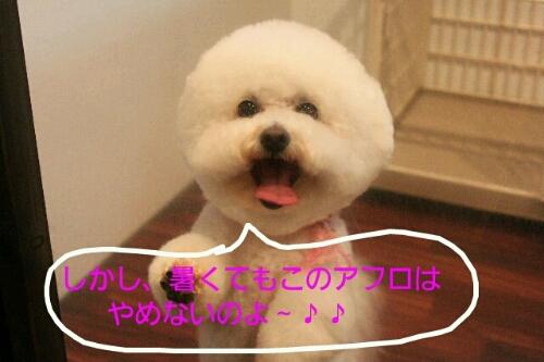 b0130018_051850.jpg