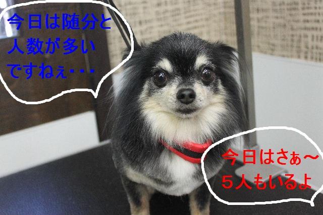 b0130018_16591881.jpg