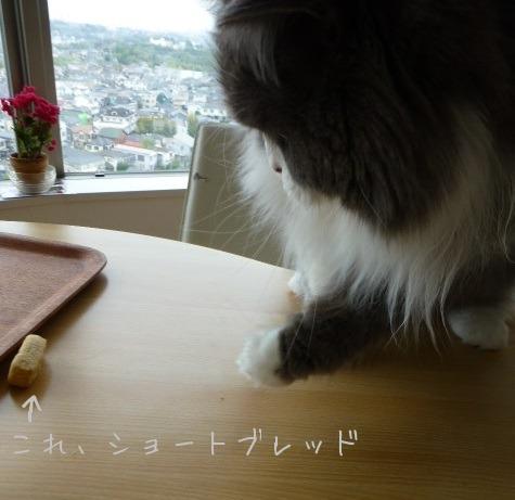 ショートブレッド好きなネコ_e0237625_00989.jpg