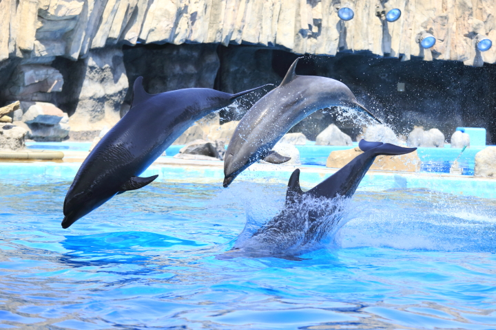 Port of Nagoya Public Aquarium 【Dolphin  May 2014】_f0253927_1010276.jpg