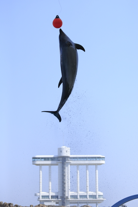 Port of Nagoya Public Aquarium 【Dolphin  May 2014】_f0253927_10112217.jpg