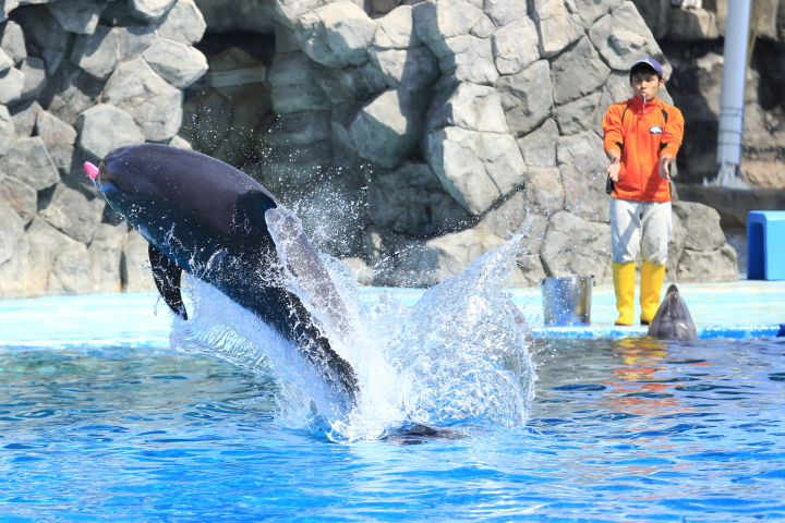 Port of Nagoya Public Aquarium 【Dolphin  May 2014】_f0253927_10152385.jpg