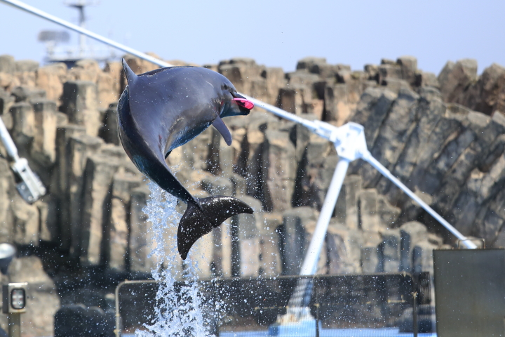 Port of Nagoya Public Aquarium 【Dolphin  May 2014】_f0253927_1016323.jpg
