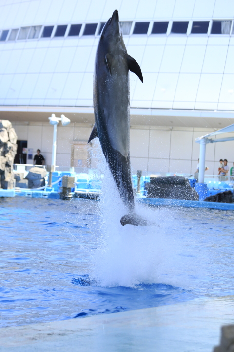 Port of Nagoya Public Aquarium 【Dolphin  May 2014】_f0253927_1085656.jpg