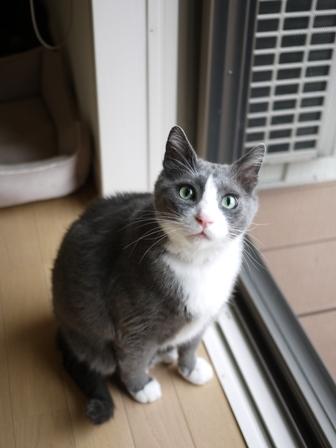 猫のお友だち カン太くんルノーちゃん編。_a0143140_02553.jpg