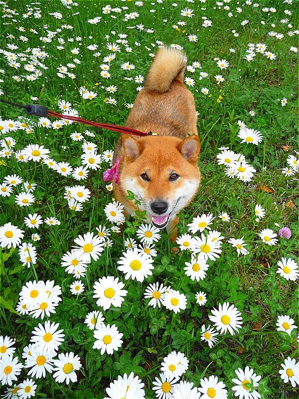 花盛り_b0314043_14244181.jpg