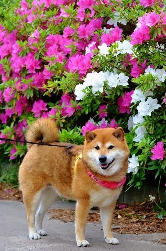 花盛り_b0314043_14351900.jpg