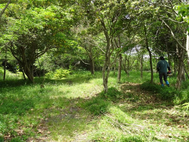 淡輪小学校1年生にお土産にあげたドングリが苗木になって帰ってきました     by     (TATE-misaki)_c0108460_21164509.jpg