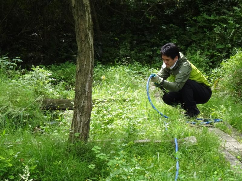 淡輪小学校1年生にお土産にあげたドングリが苗木になって帰ってきました     by     (TATE-misaki)_c0108460_21164794.jpg