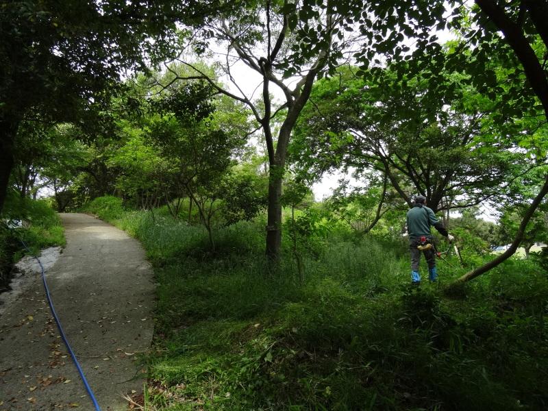 淡輪小学校1年生にお土産にあげたドングリが苗木になって帰ってきました     by     (TATE-misaki)_c0108460_21164798.jpg