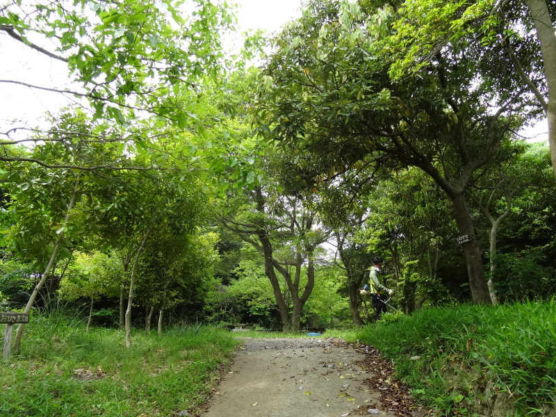 淡輪小学校1年生にお土産にあげたドングリが苗木になって帰ってきました     by     (TATE-misaki)_c0108460_21164843.jpg