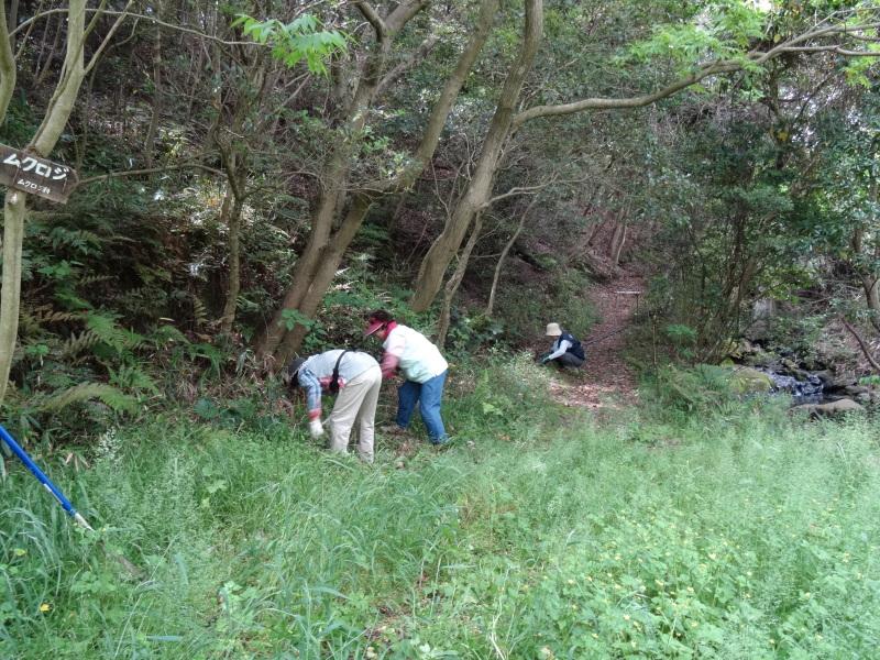 淡輪小学校1年生にお土産にあげたドングリが苗木になって帰ってきました     by     (TATE-misaki)_c0108460_21164881.jpg